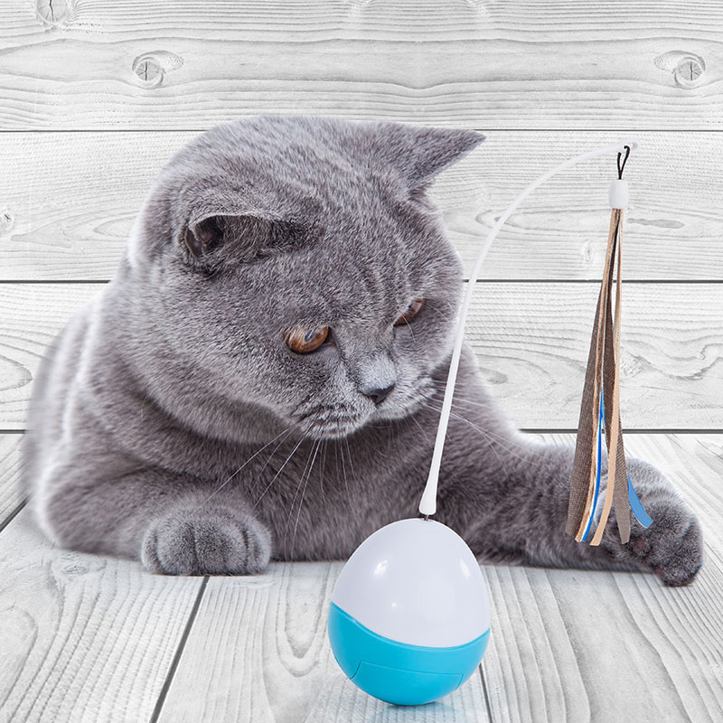 Catlove toy cat ball motivation