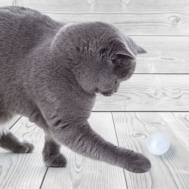 Catlove toy led ball hunting